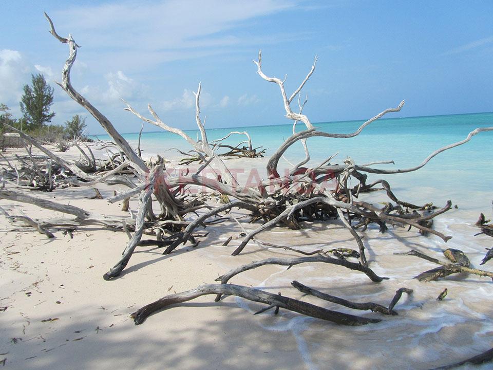 Troncos de postal en la playa de Cayo Jutías