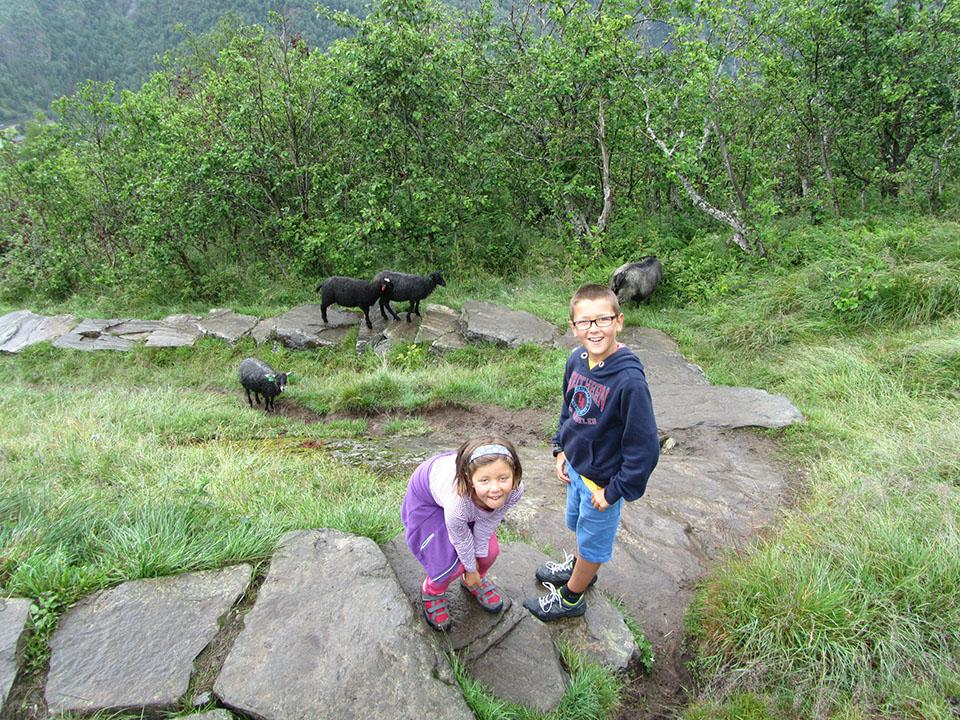 Las cabras en medio del camino de bajada de la cascada Storseter en el pueblo de Geiranger en Noruega.