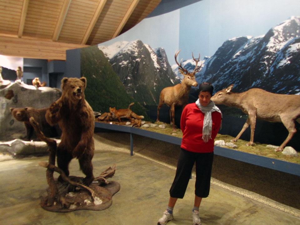 Exposición de animales de la zona en el Centro del Parque Nacional de Jostedalsbreen en Fosnes, Noruega.