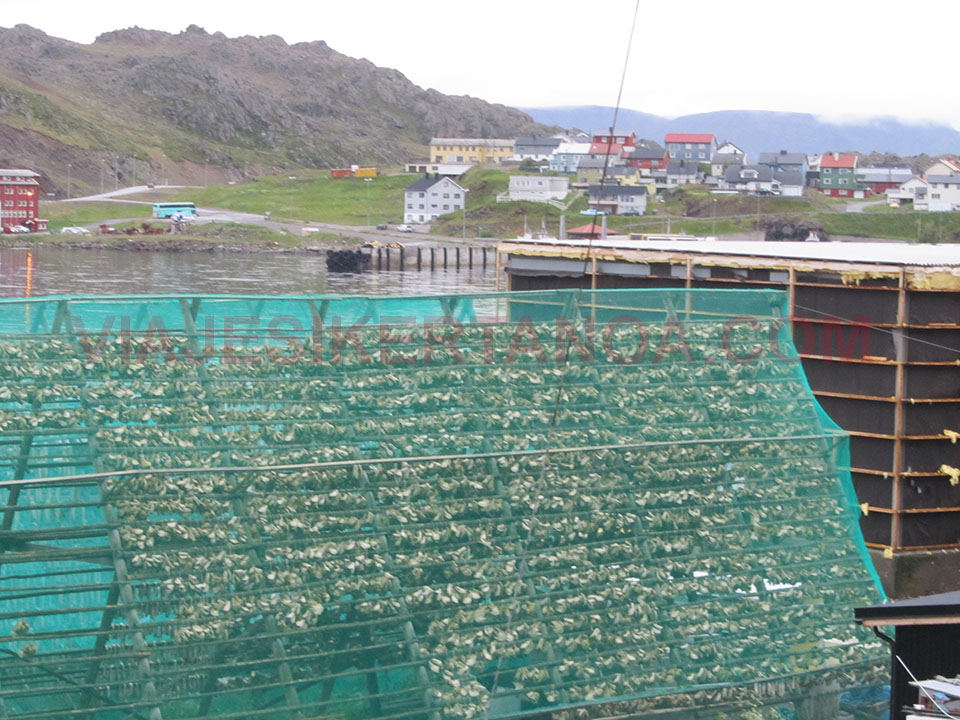 """Pescado secando al """"sol"""" en Honningsvag, Noruega."""