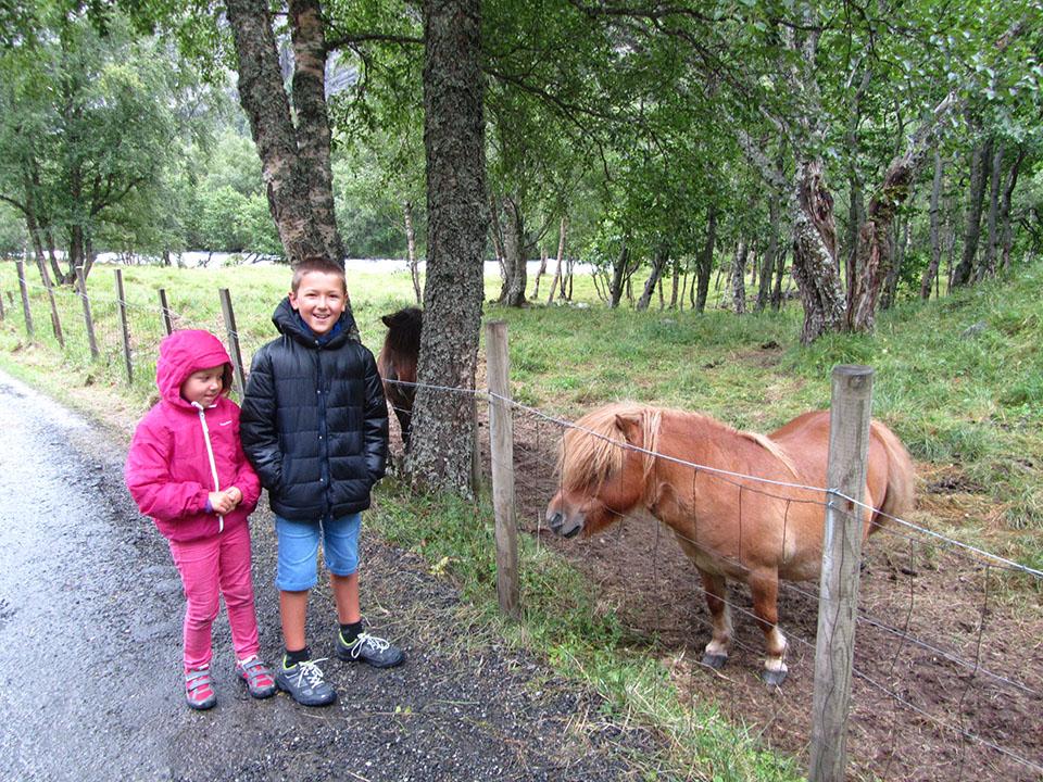 Ponis en el camino de acceso al glaciar Briksdalsbreen en Noruega.