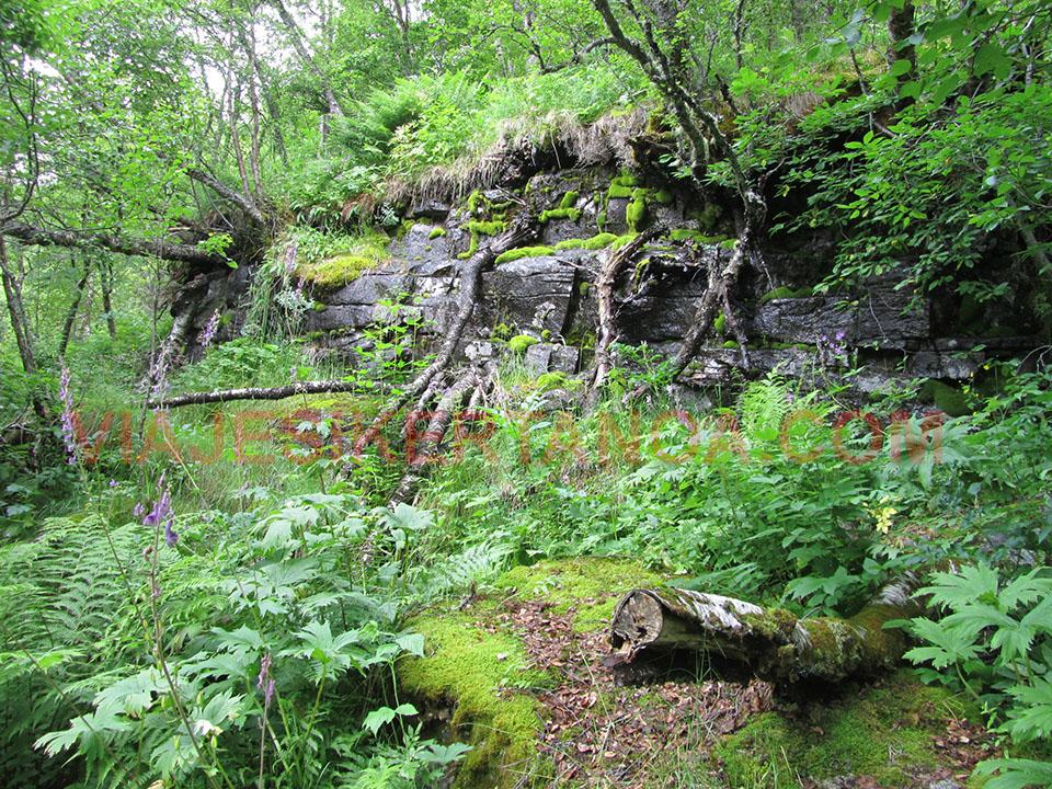 Vegetación impidiendo el paso en el fiordo Geiranger desde el mirador de Ornesvingen en Noruega.
