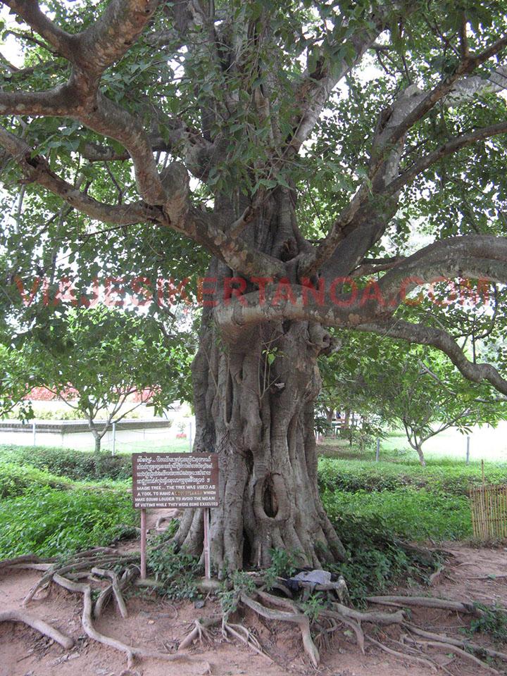 Árbol en el que eran colgados los presos en los Killing Fields de Choeung Ek en Phnom Penh, Camboya.