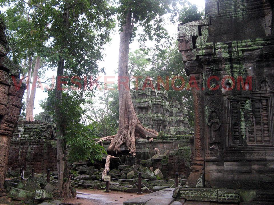 El templo Ta Prohm en las ruinas de Angkor en Siem Reap, Camboya.