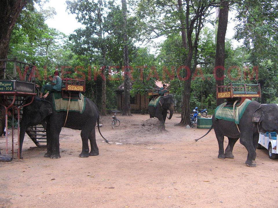 Elefantes para pasear por el recinto de Angkor en Siem Reap, Camboya.