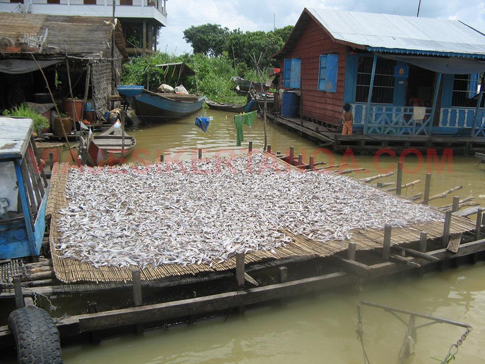 Secando la pesca al sol en el río Sangker en Camboya.