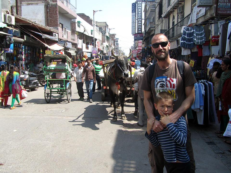 Animales por las calles de Nueva Delhi, India.