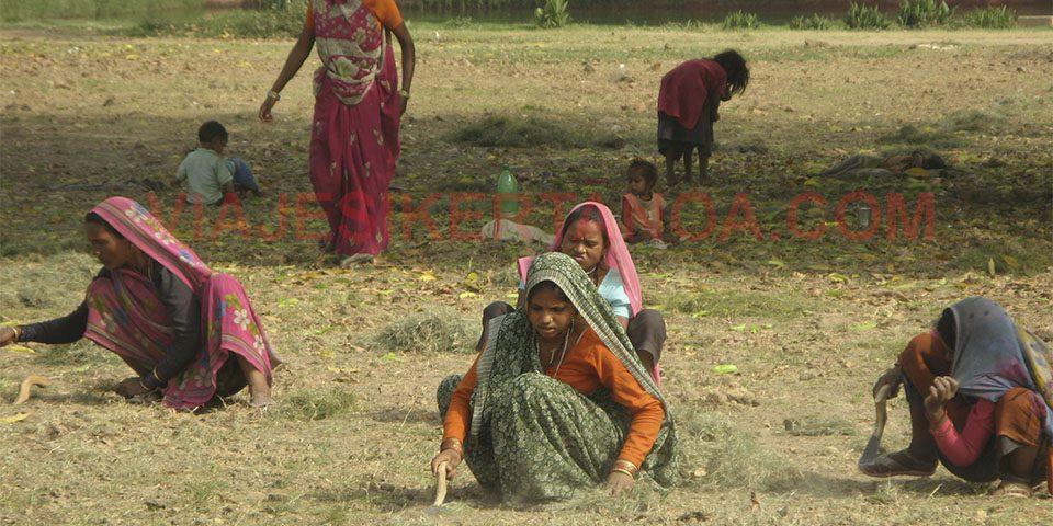 Mujeres cortando la hierba de los jardines en Nueva Delhi, India.