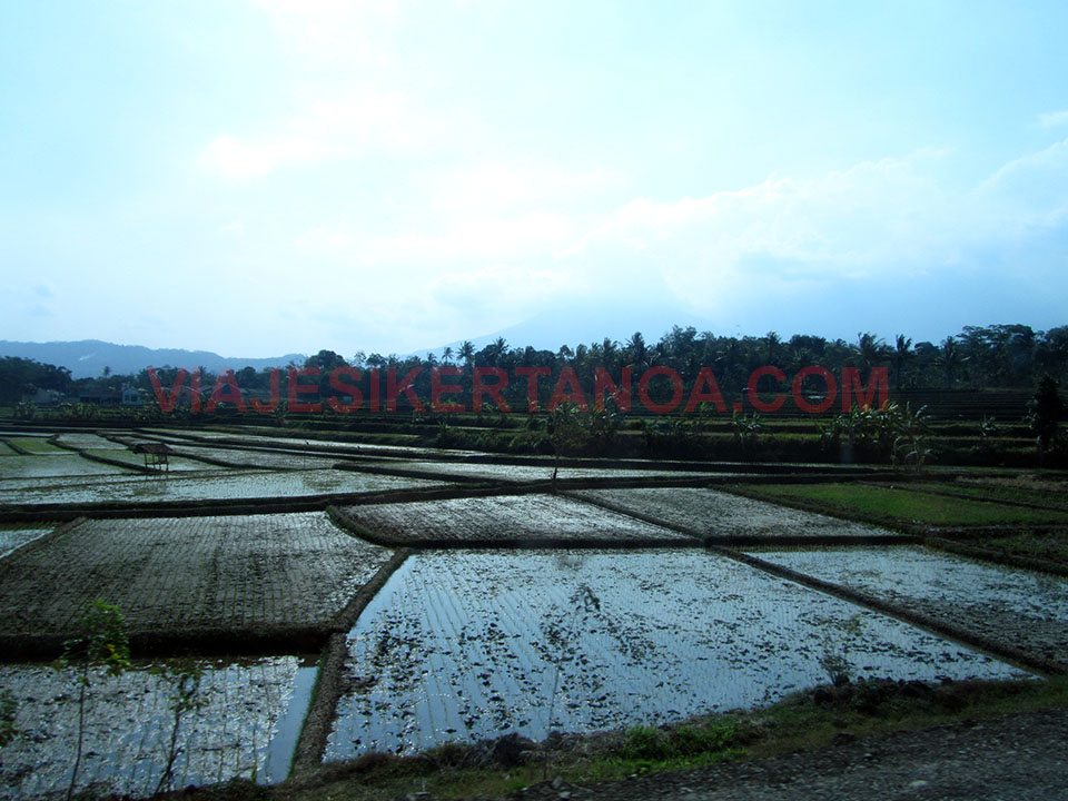 Arrozales camino Semarang en Java, Indonesia