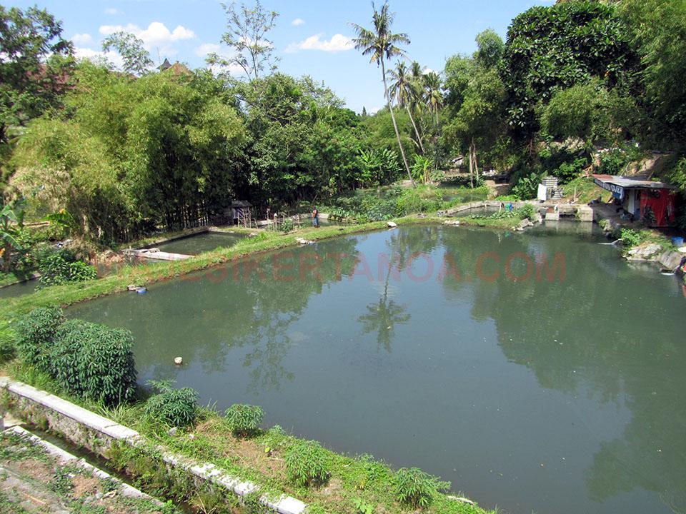 Arrozales en Yogyakarta, Indonesia