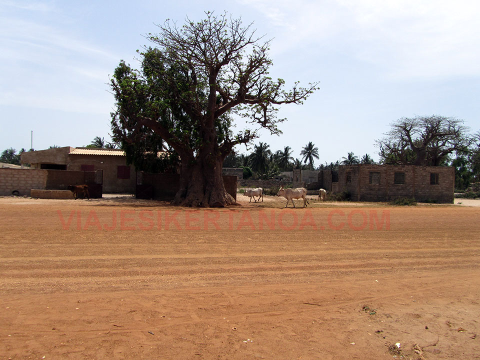 Baobab al lado de la carretera en Senegal.