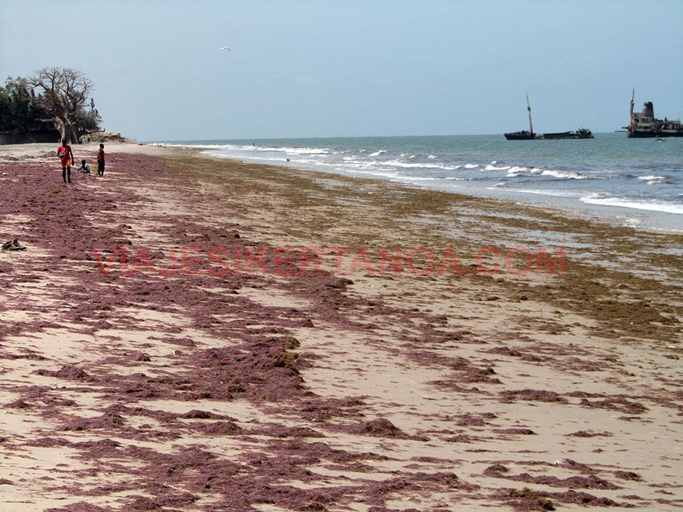 La playa llena de algas en Palmarín, Senegal