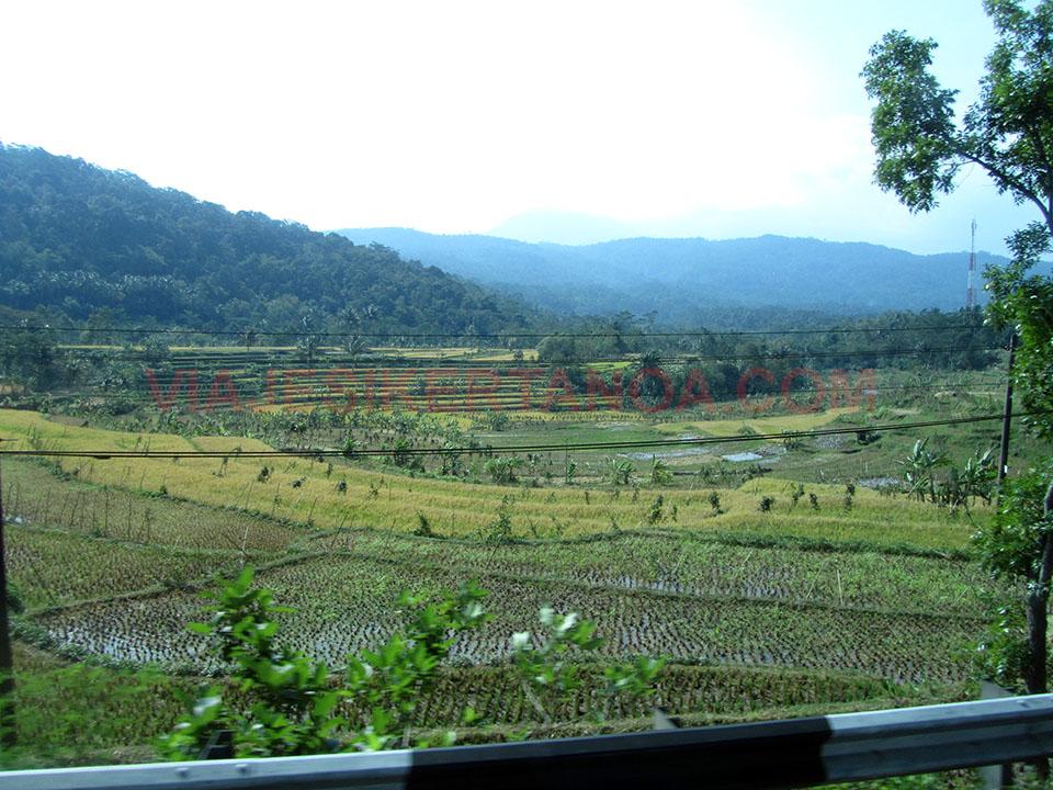 Terrazas de arroz por la carretera a Semarang en Java, Indonesia