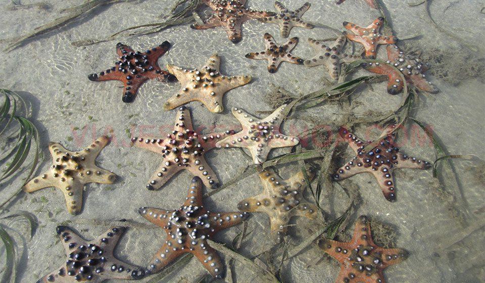 Estrellas de mar en Lombok, Indonesia