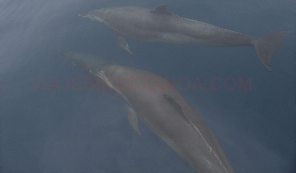 Delfines en el P.N. Marino Ballena en Costa Rica